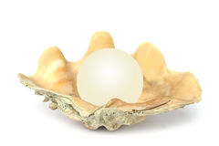 Shell with Orb stock image