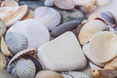 Shell oscila Imágenes de archivo libres de regalías