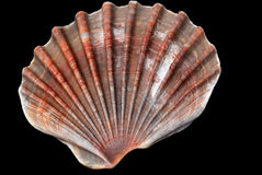 Shell over black background Stock Photo
