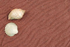 Shell over red sand. Useful as background Stock Photo