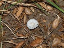 Shell på banan Royaltyfria Foton