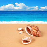 Shell på den sandiga stranden Arkivfoto