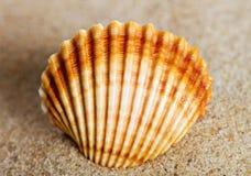 Shell på en sand Arkivfoton