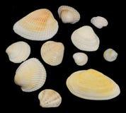 Shell på en svart bakgrund Fotografering för Bildbyråer