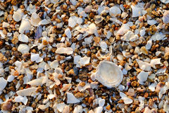 Shell på kusten Fotografering för Bildbyråer