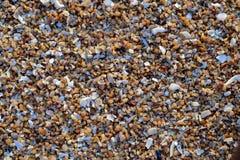 Shell på kusten Royaltyfri Bild