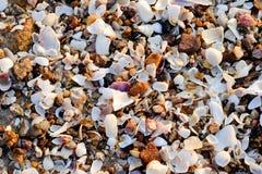 Shell på kusten Royaltyfri Fotografi