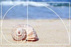 Shell på sand på havskusten arkivfoton