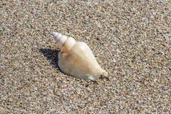 Shell på sand på sommarstranden Sand i bakgrunden Royaltyfria Foton
