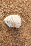 Shell på sanden Arkivbild