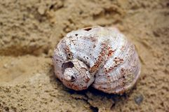 Shell på sanden Fotografering för Bildbyråer
