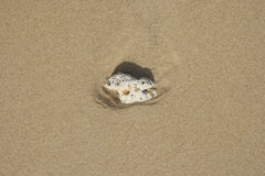 Shell på sanden Royaltyfria Foton