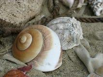 Shell på strand royaltyfria bilder