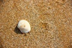 Shell på strand royaltyfri fotografi