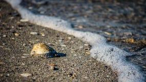 Shell på strand Arkivfoto