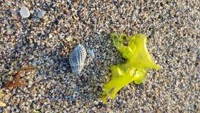 Shell på stranden arkivfoto