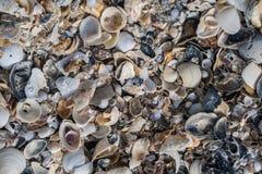 Shell på stranden Fotografering för Bildbyråer