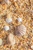 Shell på stranden Royaltyfri Fotografi
