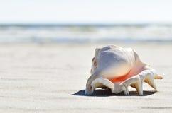 Shell på stranden Arkivbilder