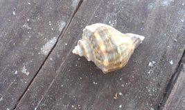 Shell på stranden Royaltyfri Bild