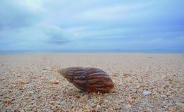 Shell på stranden Royaltyfria Foton