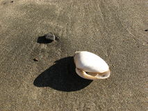 Shell på stranden Arkivbild