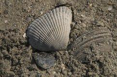 Shell på stranden Royaltyfri Foto