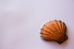 Shell på vit bakgrund arkivbilder