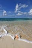 Shell på sandstranden Arkivfoto