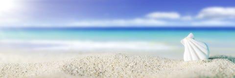 Shell p? stranden royaltyfria foton