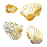 Shell painted watercolor. Isolated set on white background stock illustration