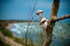 Shell panoramy Shabla plaży Bułgaria makro- morze Obrazy Royalty Free
