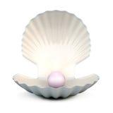 Shell-parel op een wit vector illustratie