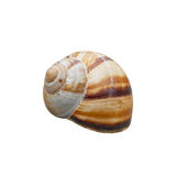 Shell with path Stock Image
