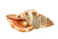 Shell with pearl Royalty Free Stock Photography