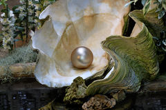 Shell with pearl. Giant disclosed seashell with pearl Royalty Free Stock Photos