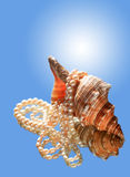 Shell And Pearl. Beautiful conch shell with pearls necklace on blue background with reflection Stock Images