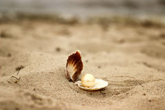 Shell with a pearl close-up lying on the beach sand and sea background Stock Photography