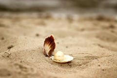 Shell with a pearl close-up lying on the beach sand and sea background Royalty Free Stock Photography