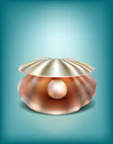 Shell with a pearl. Naturalistic shell with a beautiful pearl Stock Images