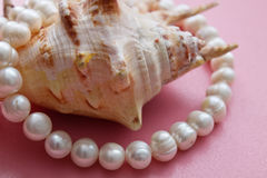 Shell with a pearl necklace. Shell is shown with beads of pearls Royalty Free Stock Photo
