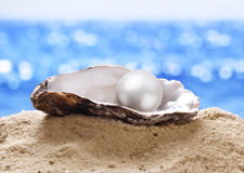 Shell with a pearl. Stock Image