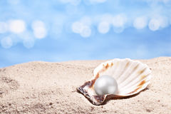 Shell with a pearl. Royalty Free Stock Photos