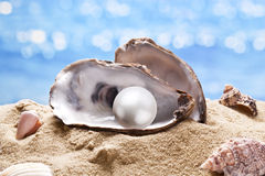 Shell with a pearl. Shell with a pearl on a sea sand Stock Photography