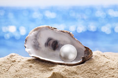 Shell with a pearl. Stock Images
