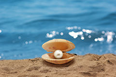Shell with a pearl. Sea, vacation, and can be used in valuing work-related issues Stock Image
