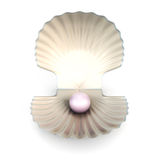 Shell pearl  on white background Royalty Free Stock Photo