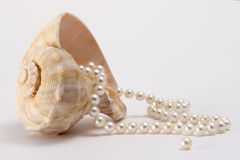 Shell and Pearls. String of pearls coming out of a conch shell Royalty Free Stock Photo