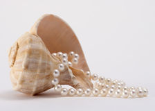 Shell and Pearls. From deep on the ocean floor Royalty Free Stock Photo