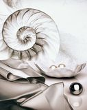 Shell with pearls and silk drapery on light background. Marine still-life royalty free stock photo